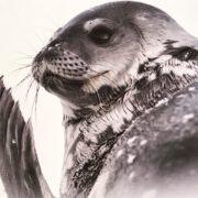 Antartica- Museum des Sciences naturelles ,Bruxelles -->30/8